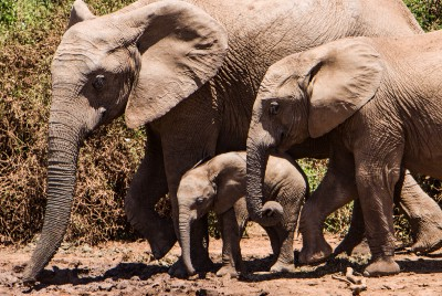 How a Kind Conservationist Saved the Lives of a Herd of Aggressive Elephants