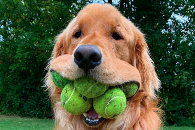 Have you seen the dogs who play tennis? (Funny compilation)