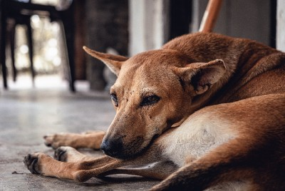 4 Reasons Why You Should Adopt a Stray Dog