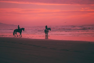 Keeping away from and Correcting Bad Behavior in the Horse—Naturally and Effectively