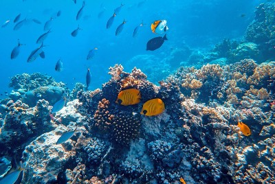 The Valuable Presence of Coral Reefs