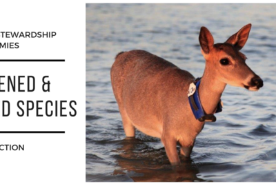 Private Land Stewardship Academies: Threatened and Endangered Species