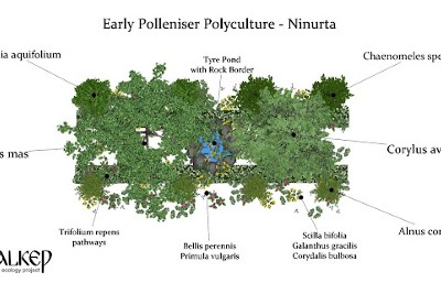 The Early Polleniser Polyculture—A Support Polyculture for Orchards, Farms and Gardens