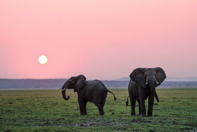 World Elephant Day Brings Awareness to the Plight of Elephants