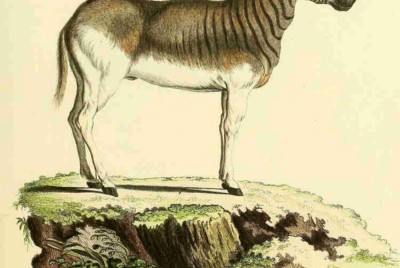 Of Zebra Stripes and Other Questions: Science and Nature at Work (I)