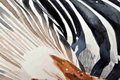 Of Zebra Stripes and Other Questions: Science and Nature at Work (II)