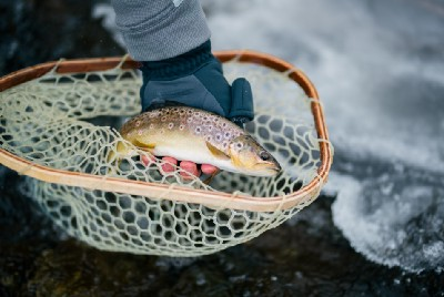 Fly Fishing for Brown Trout in Washington State