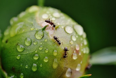 What Do You Do When Ants Invade Your Plants?
