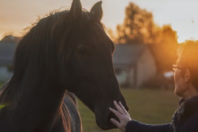 HOW TO CARE FOR HORSE: THE BASICS YOU NEED TO KNOW