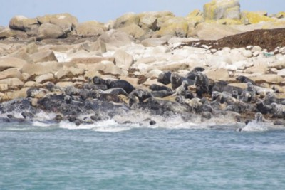 UK Government backs campaign to protect seals