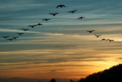 FOUR AMAZING FACTS ABOUT MIGRATING BIRDS