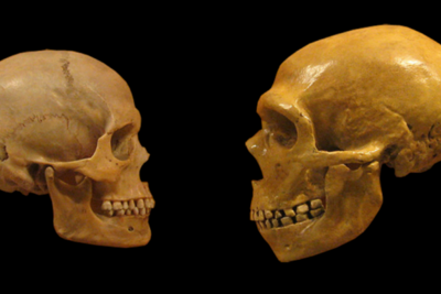 The Gene Regulation Differences that (Possibly) Made us Human