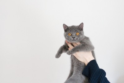 3 Ways to Help Calm Down Your Crazy Cat