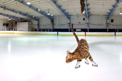 Best of cats figure-skaters! (Funny)