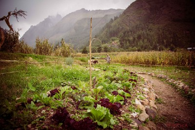 Becoming an Ally and a Food Security Activist in the Sacred Valley of Peru