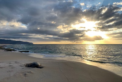 How You Can Help Sea Turtles During Nesting Season