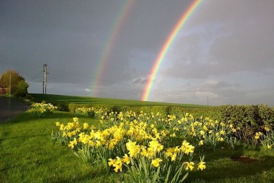 It's All Sunshine, Daffodils, Rainbows, and Baby Animals
