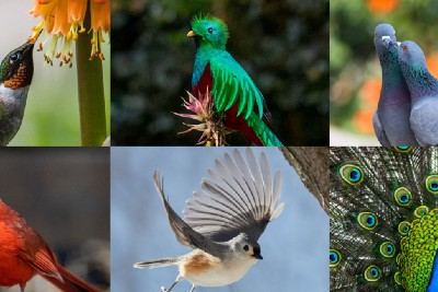 A Collection of Musings About Birds