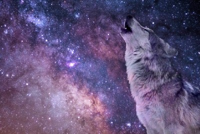 A Video Introduction to Ulf Wolf