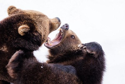 The 2 Worst Bear Markets Of All Time