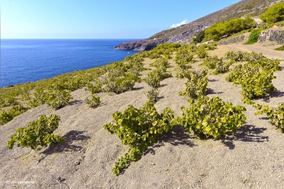 How To Produce Wine On A Volcano And Make It UNESCO Heritage