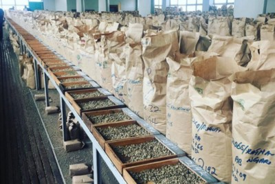 Coffee Prices Explained: A Beginners Guide to Green Coffee Prices
