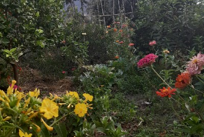 Permaculture garden in a hot dry climate: from dry barren scrub land to paradise food forest.