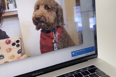 Can remote dog therapy visits work?