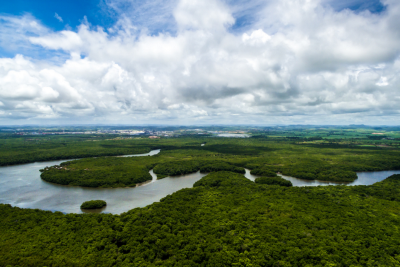 Tracking Ecosystem Changes in the Amazon