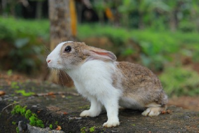 Implementing an event driven architecture with RabbitMQ