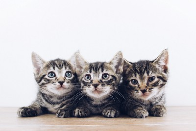 When Kittens Choose Their New Families
