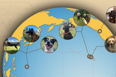 Conservation Canines of the Pacific: Protecting Refuges and Wildlife, One Paw at a Time