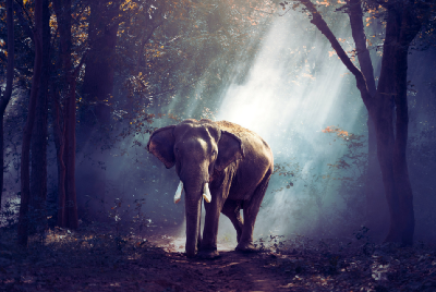 Elephants: The Guardians of The Wild