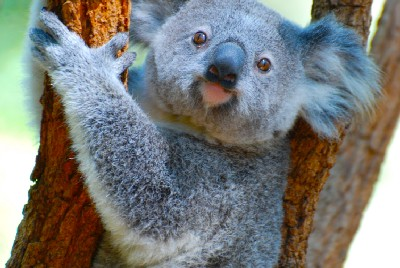 Koalas are not Bears, Jellyfish are not Fish, Blowjobs are not Blowing, and an Electrical Pulse in…