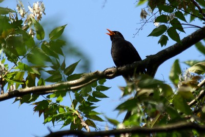 Why does birdsong sound so beautiful to us? It's all about evolutionary purpose