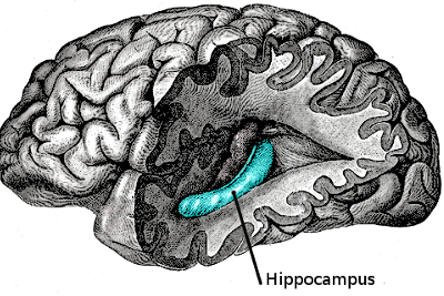 Digital hippocampus, how to build one