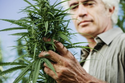Older Adults Are The New Cannabis Consumer—Does your marketing strategy connect with the 50+ and…