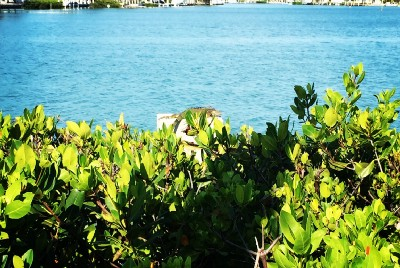 """Top three reasons to work """"extra remote"""" from the Florida Keys"""