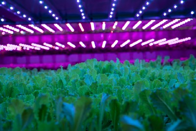 Can vertical farming help feed the planet?