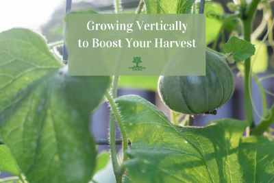 Growing Vertically to Boost Your Harvest