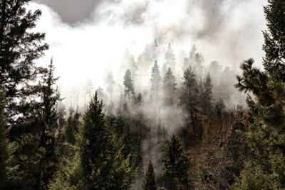 Wildfire and a forest worth fighting for