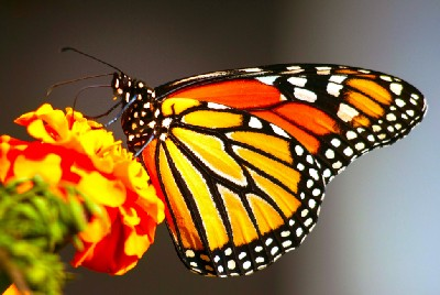 We delight in the beauty of the butterfly…