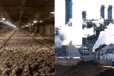 Chicken: The Natural Gas of Food