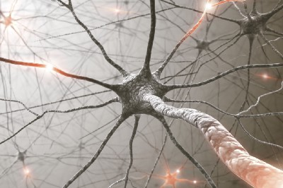 Bit Bio: You can now order neurons online!