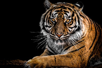 The Business of Being a Tiger Mom