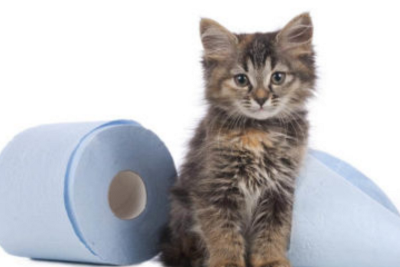 3 Simple Steps to Get Cat Pee Smell Out of Your Carpet—Val Heart