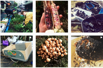 Growers of Wellington. A Central City Urban Food Resilience Project.