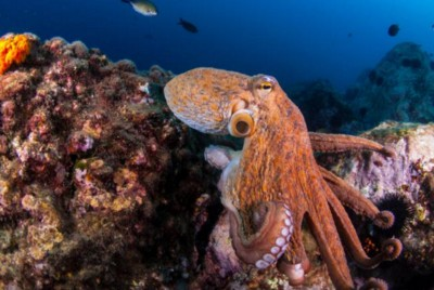 "The documentary ""My Octopus Teacher"" shows that living close to nature helps us to develop…"