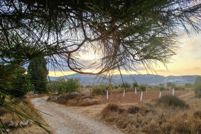 Close Encounter on the Trail—A Running Adventure