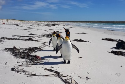 Falkland Encounters: Petrels, Penguins, and not so Perfect Pictures